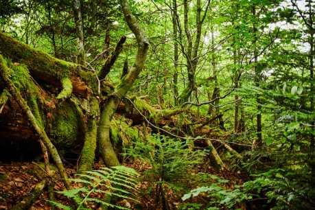 Nationalpark_Schwarzwald