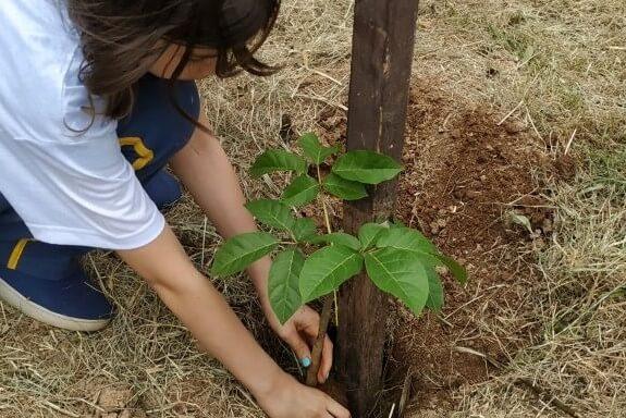 PlantingTree (1)