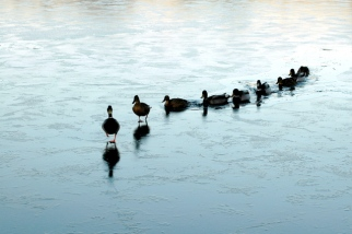 ducks-in-a-row-1316756-639x424