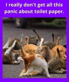 coronavirus-jokescats
